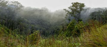 Wooded mountainside in a low lying cloud. Shrouded in mist in a beautiful landscape view royalty free stock photography