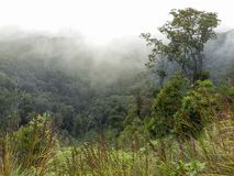 Wooded mountainside in a low lying cloud. Shrouded in mist in a beautiful landscape view royalty free stock image