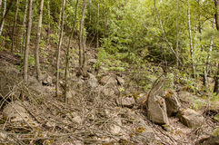 Wooded mountainside Royalty Free Stock Images