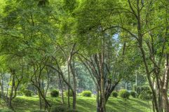 Wooded park Royalty Free Stock Image