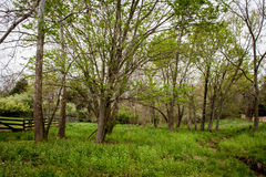 Wooded Pasture Stock Photo