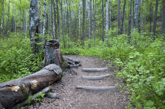 Wooded Path. Stepped path through green woods with log on side Royalty Free Stock Image