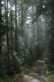 Wooded Path. A path in the woods with fog Stock Images