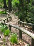 Wooded Path. A path through the woods with wooden railings alongside Royalty Free Stock Image