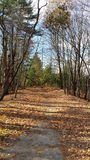 Wooded Path. Autumn bare trees Royalty Free Stock Photo