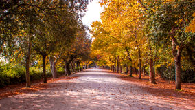 Wooded path in autumn. Tree-lined path in autumn inside a park Royalty Free Stock Photo