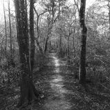 Wooded path. Black and white wooded path Royalty Free Stock Photo