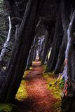 Wooded Path. A path bordered by overhanging trees in Sea Ranch, California Royalty Free Stock Photography