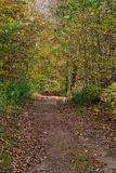 Wooded Path in the Fall. A fall day and a path in the woods Stock Images