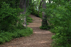 Wooded Path. Path through a wooded forest Royalty Free Stock Photography