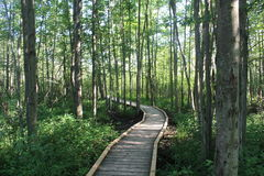Wooded Path Through a Forest. Man made wooden pathway through a forest to allow for limited disruption to wildlife Stock Photo