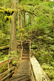 Wooded path in a green paraise. Deception falls trail in Western Washington Royalty Free Stock Photography