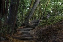 Wooded Path Leading into Forest stock photos