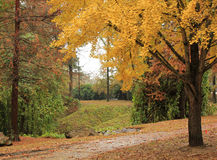 Wooded path. Nature trail ginkgo Royalty Free Stock Photos