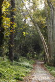 Wooded path Stock Photos