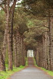 Wooded path. Photographed in daylight wooded path, background image, color image Stock Images