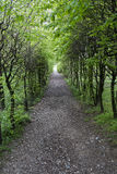 Wooded path. In spring season Stock Image