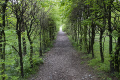 Wooded path. In spring season Royalty Free Stock Photos