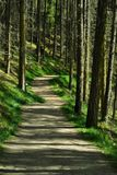 A wooded path with sun and shade. Contin forest on the Black Isle, Scotland Stock Image