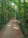 Wooded path in Tallahassee Florida royalty free stock photography