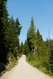 Wooded Path, Whistler, Canada. This image shows a Wooded Path, in Whistler, Canada Stock Photo