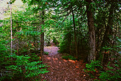 Wooded path. A path through the wood at presque isle in northern michigan Royalty Free Stock Photos