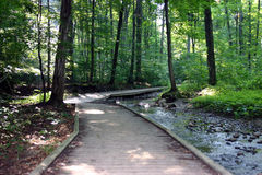 Wooded pathway through forest. A wooded trail through forest past water royalty free stock photo
