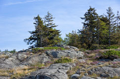 Wooded Rocks Royalty Free Stock Photos