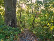 Wooded Rocky path. Rocky path in the park Royalty Free Stock Photos