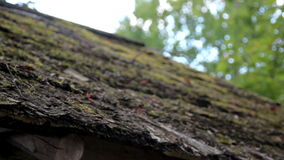 Wooded Roof of the hut that is organic is covered in Moss Stock Image