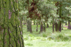 Wooded scene Royalty Free Stock Photos