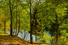 Wooded Shore Stock Images