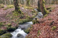 Wooded Stream Royalty Free Stock Photography