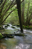 Wooded Stream Royalty Free Stock Photo