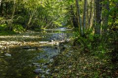 Wooded Stream with Filtered Sunlight Coming Through Trees royalty free stock image
