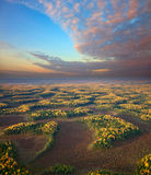 Wooded terrain in autumn evening, top view Royalty Free Stock Photography