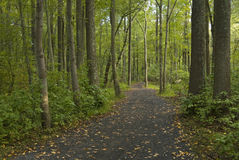 Wooded Trail Stock Photo