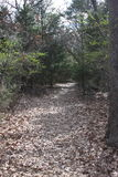 Wooded Trail in Texas. Royalty Free Stock Images