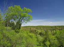 Wooded valley. The sun shines on a forest filled valley stock photo