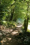 Wooded walk in the dappled sunlight. A woodland path with dogs in the dappled shade royalty free stock image