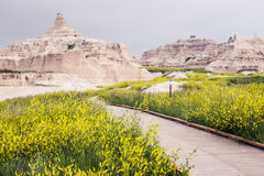 Wooded Walkway | Badlands National Park, South Dakota, USA. Fields of flowers grow so thick at Badlands National Park that wooded walkways are used rather than Stock Photography