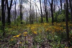 Wooded Wildflower Clearing Royalty Free Stock Image