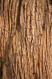 Wooden Abstract Royalty Free Stock Images