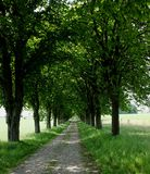 Wooden alley in spring Stock Images