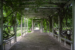 Wooden arbour covered with climbers in park. Wooden arbour covered with lianas in park Royalty Free Stock Photo