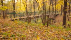 Wooden Arch Bridge stock footage