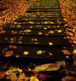 Wooden autumn footpath Stock Photo