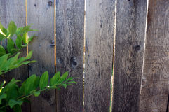 Wooden Backdrop. Green leaves against a wooden fence Royalty Free Stock Photo