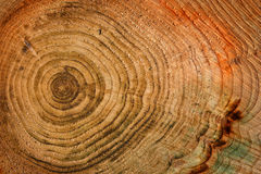 Wooden background with age circles Royalty Free Stock Photography