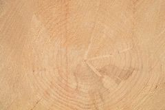Wooden background. Annual rings on the face of the tree. royalty free stock photos
